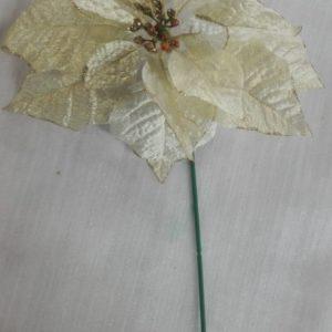 Flor poinsettia crema