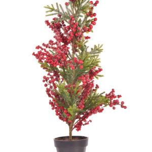 Planta decorativa Cafeto