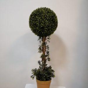 Arbusto buxus