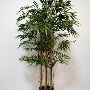 Planta de bamboo