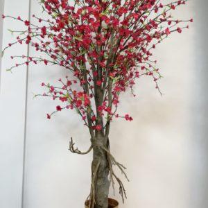 Àrbol durazno flores rojas