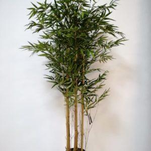 Planta Bamboo 150cm