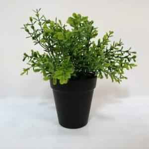 Planta hojas verdes
