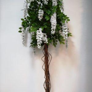 Planta flores blancas