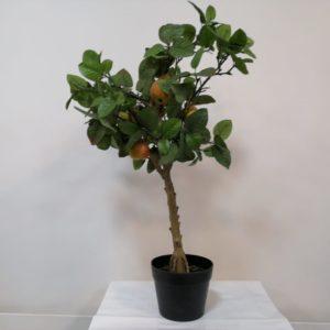 Planta frutos de pera
