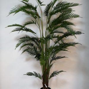 Palma decorativa