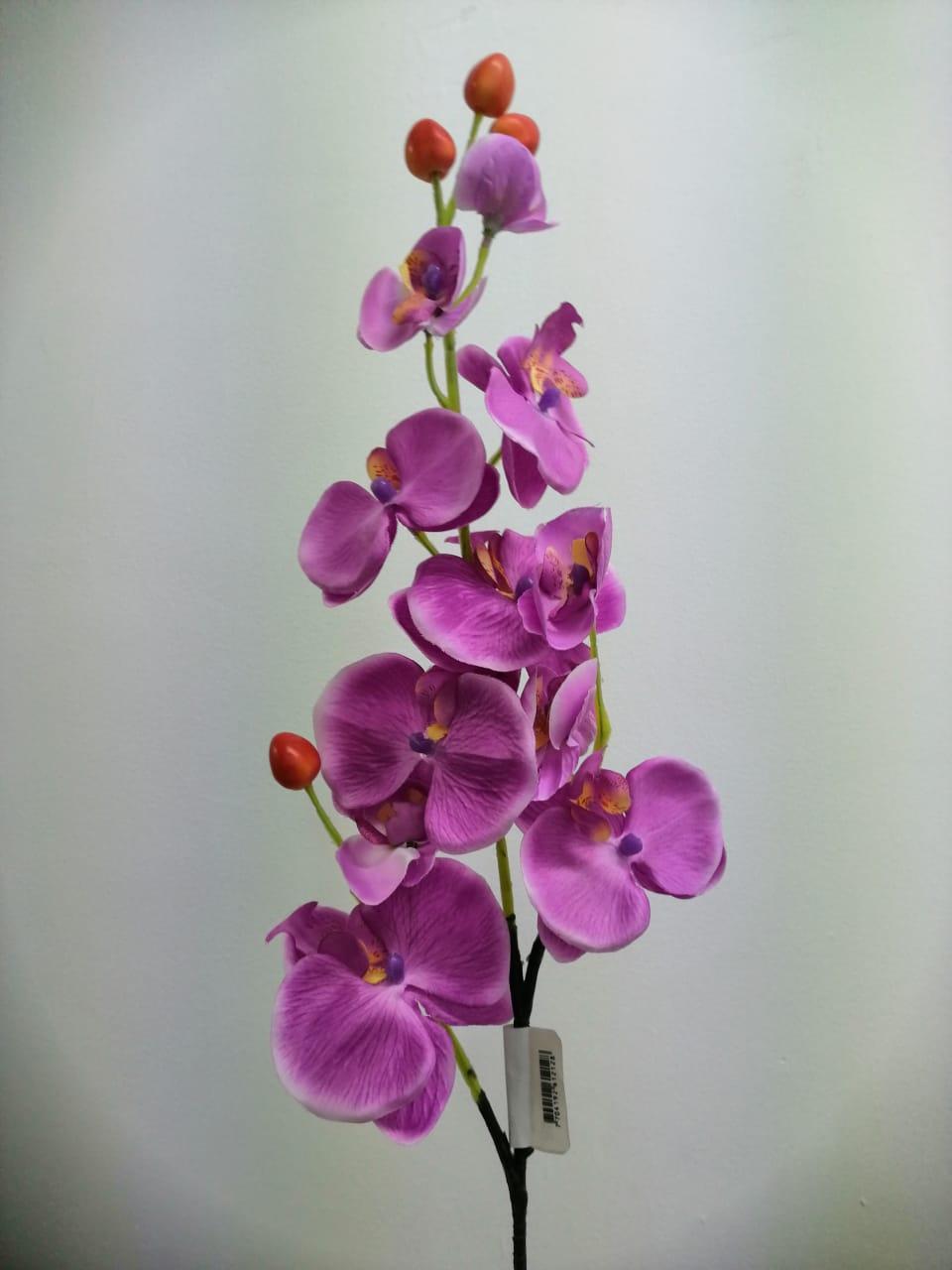 Flor orquídea suelta