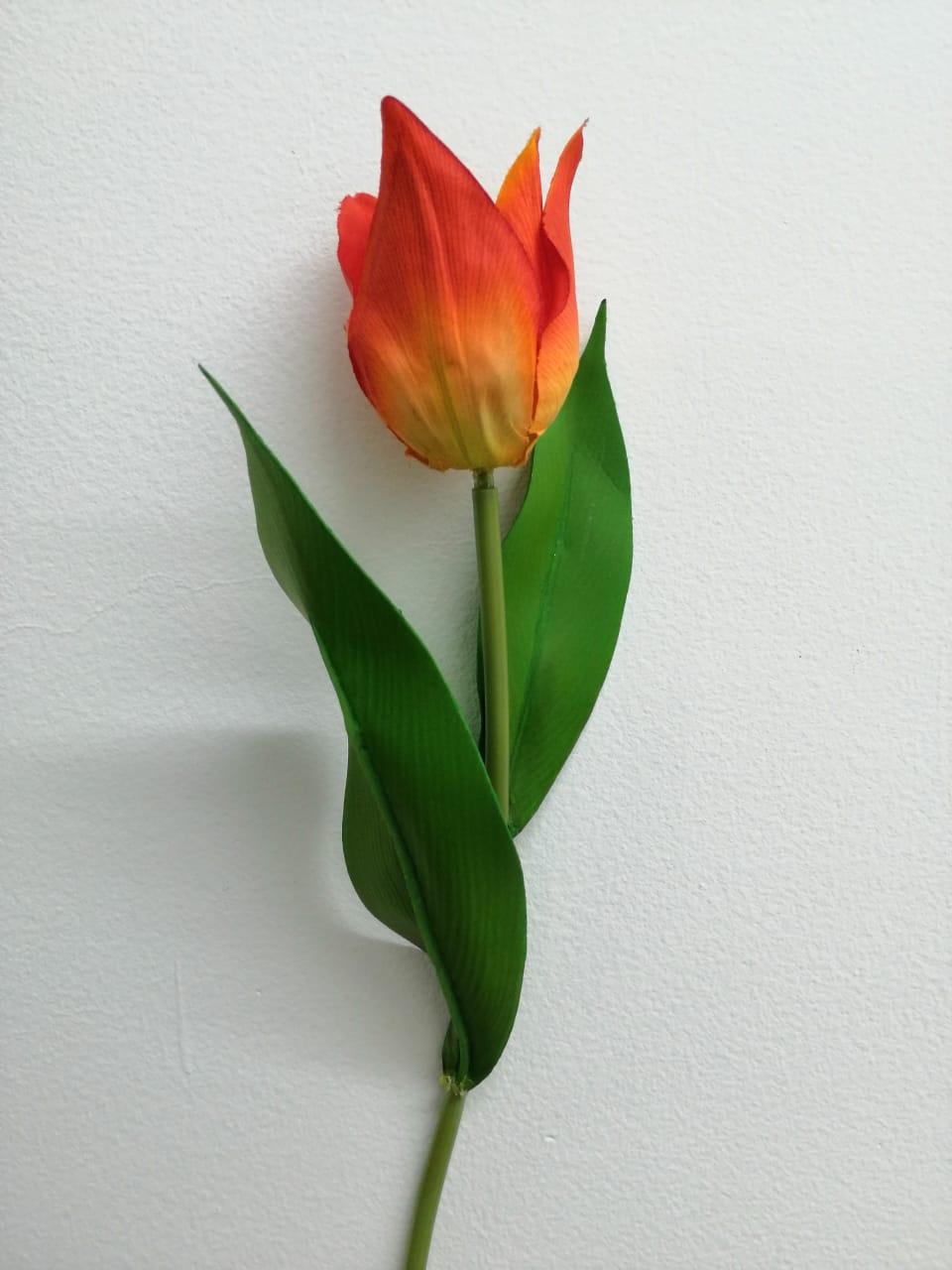 Flor de tulipan